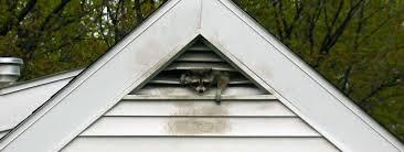 Dayton Raccoon Removal Wildlife Control In Dayton Oho