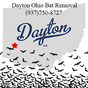 Dayton Ohio bat removal