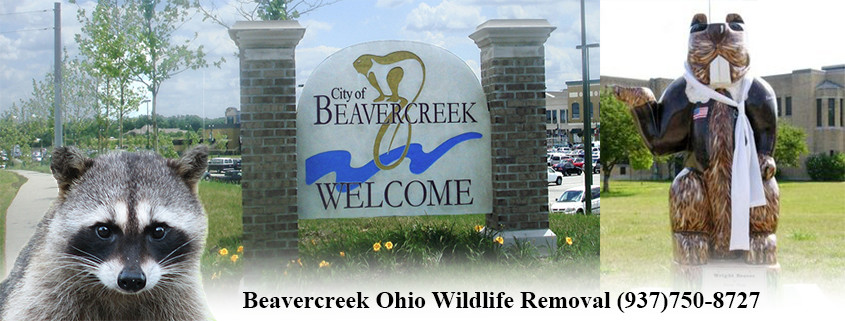 Beavercreek Ohio Animal Control and Wildlife Removal