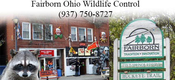 Fairborn ohio wildlife control