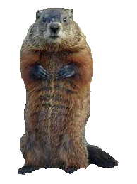 Groundhog21