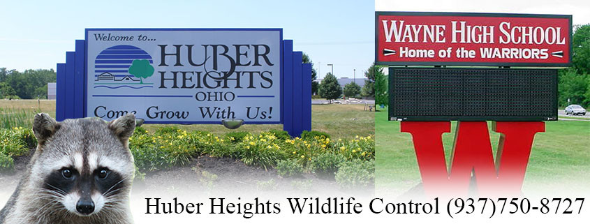 Huber heights ohio wildlife control