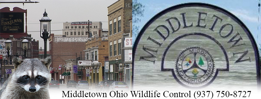 Middletown Ohio Animal Control and Wildlife Removal
