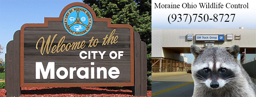 Moraine Ohio wildlife control