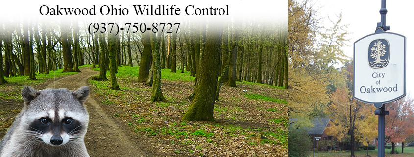oakwood ohio wildlife control