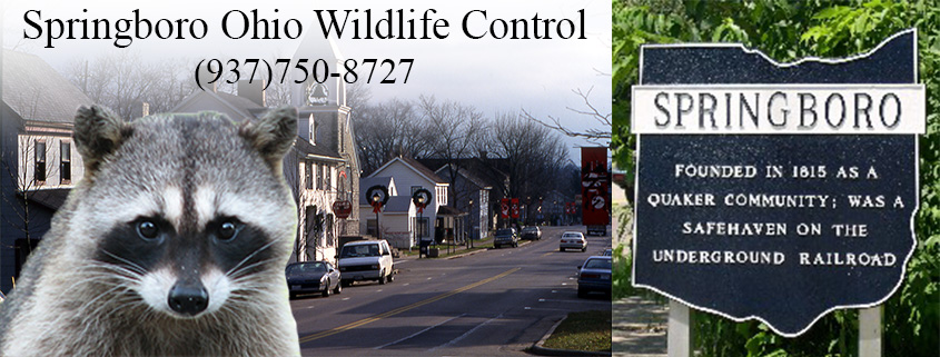 Springboro Ohio Animal Control And Wildlife Removal