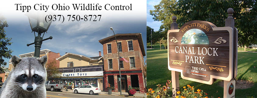 Tipp City Ohio Wildlife Control And Wildlife Removal