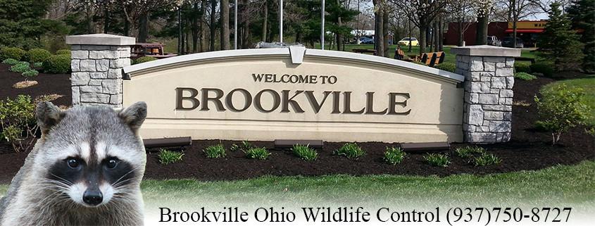 Brookville Ohio wildlife control