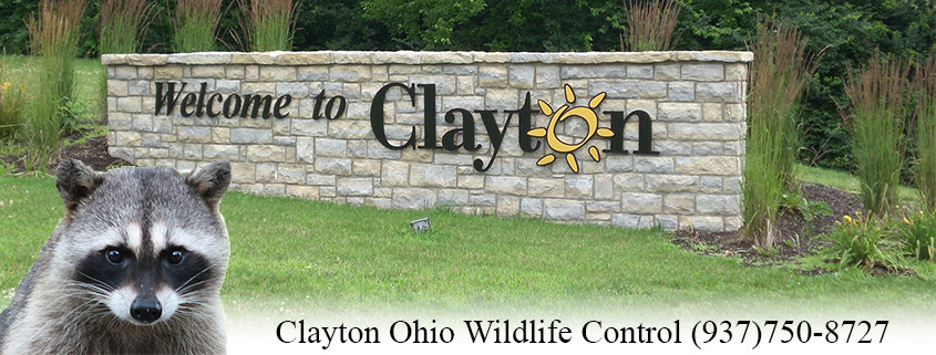 clayton ohio wildlife control