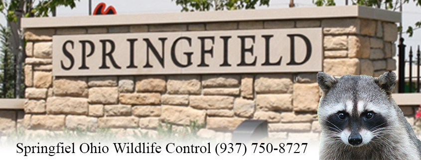 springfield ohio wildlife control