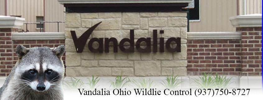 vandalia ohio wildlife control