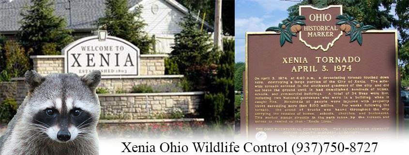 Xenia ohio wildlife control