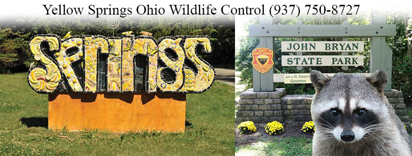 yellow springs ohio wildlife control