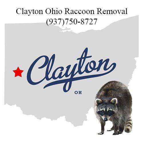 Clayton Ohio Raccoon Removal