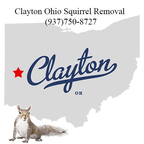 Clayton Ohio Squirrel Removal