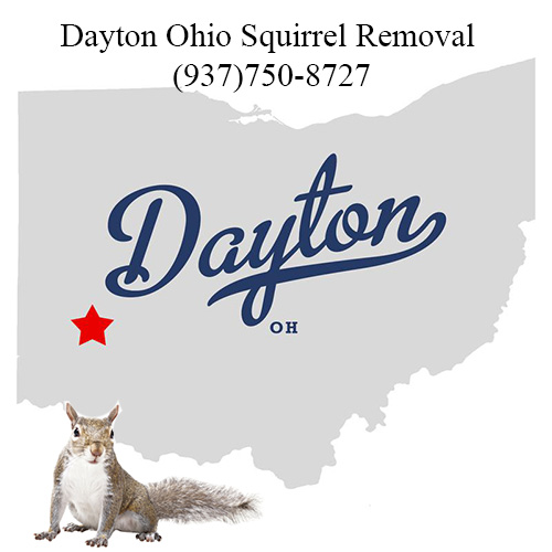 Dayton Ohio Squirrel Removal