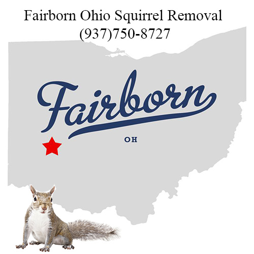 Fairborn Ohio Squirrel Removal