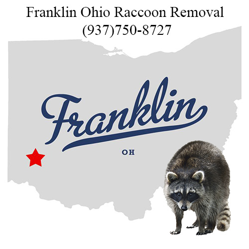 Franklin Ohio Raccoon Removal