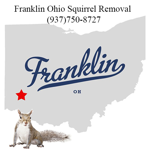 Franklin Ohio Squirrel Removal