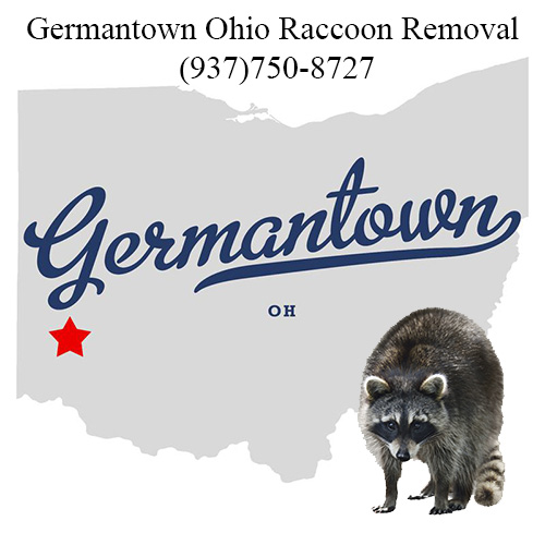 Germantown Ohio Raccoon Removal