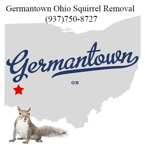 Germantown Ohio Squirrel Removal