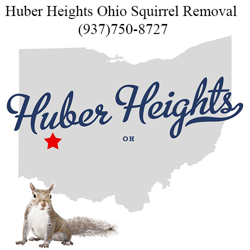 Huber Heights Ohio Squirrel Removal