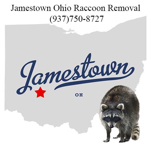 Jamestown Ohio Raccoon Removal