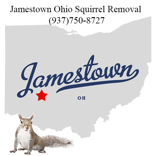Jamestown Ohio Squirrel Removal