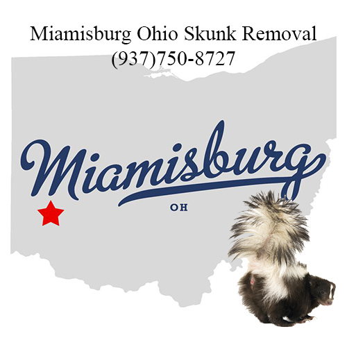 miamisburg ohio skunk removal