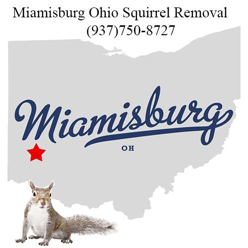 Miamisburg Ohio Squirrel Removal