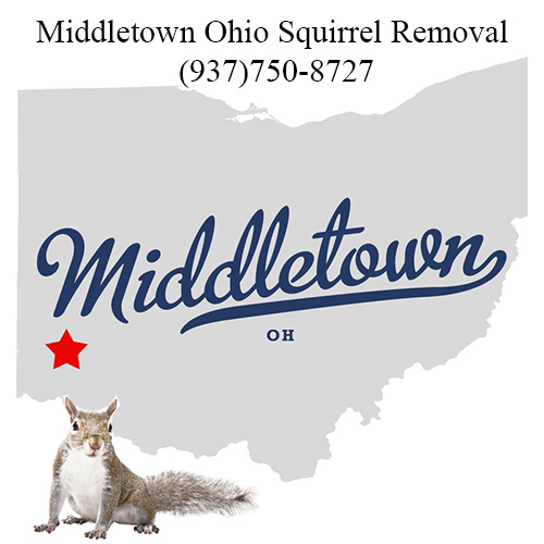 Middletown Ohio Squirrel Removal