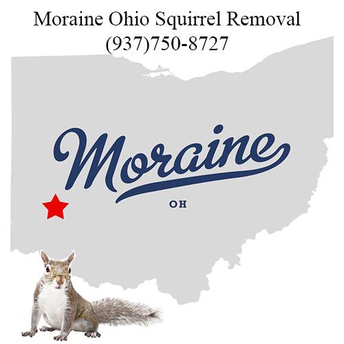 Moraine Ohio Squirrel Removal