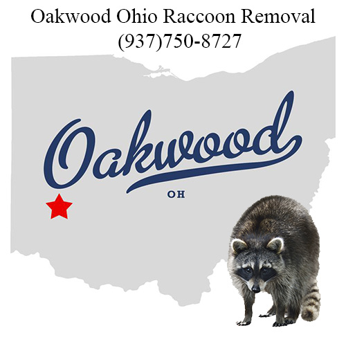 Oakwood Ohio Raccoon Removal