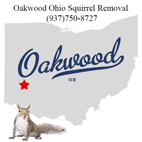 Oakwood Ohio Squirrel Removal