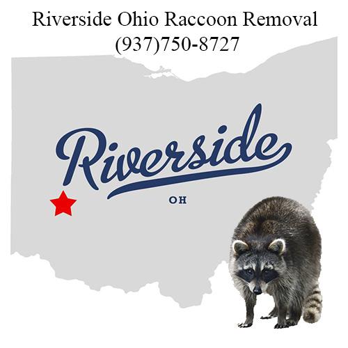 Riverside Ohio Raccoon Removal