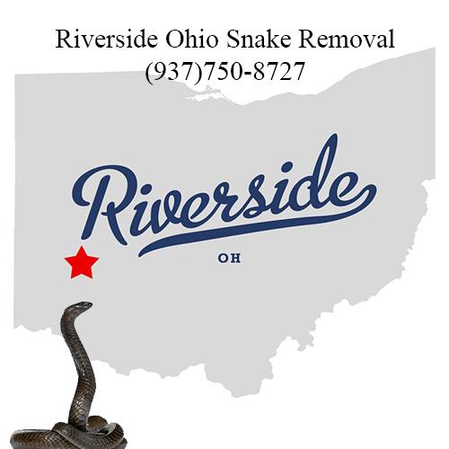 riverside ohio snake removal