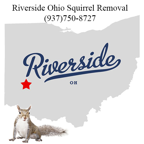 Riverside Ohio Squirrel Removal
