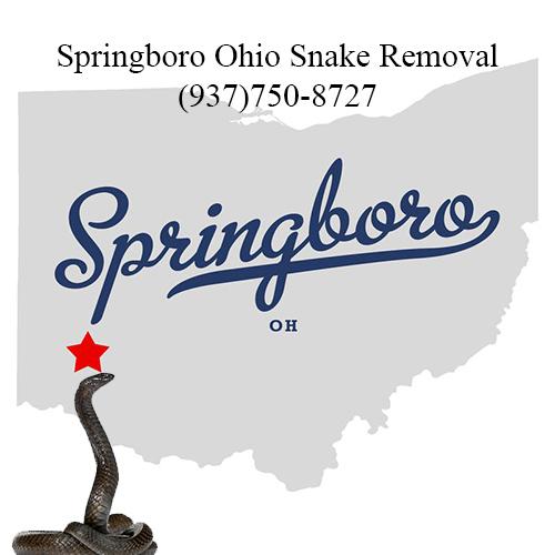 springboro ohio snake removal