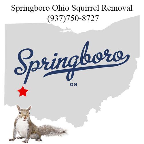 Springboro Ohio Squirrel Removal