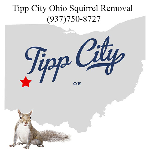 Tipp City Ohio Squirrel Removal