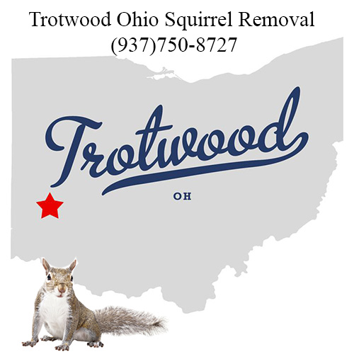 Trotwood Ohio Squirrel Removal