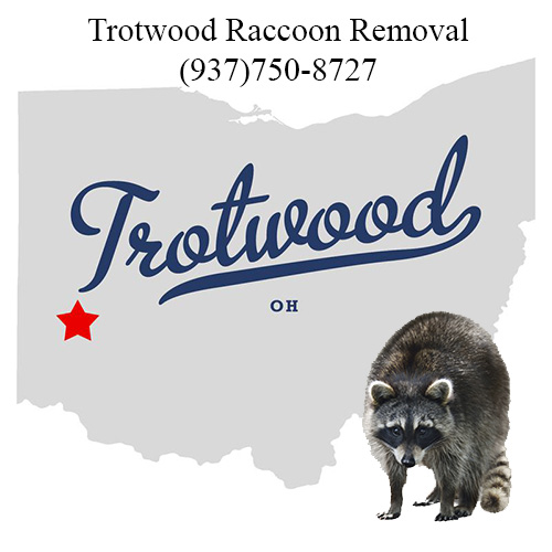 Trotwood ohio Raccoon Removal