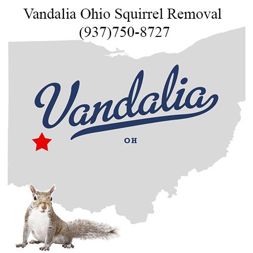 Vandalia Ohio Squirrel Removal