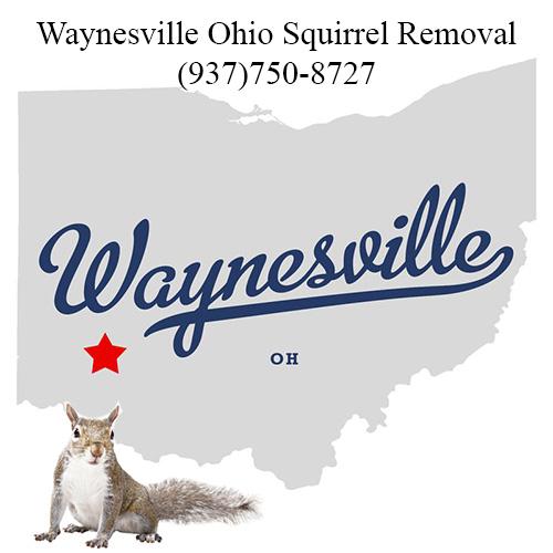 Waynesville Ohio Squirrel Removal