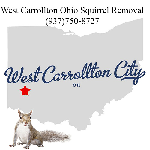 West Carrollton Ohio Squirrel Removal