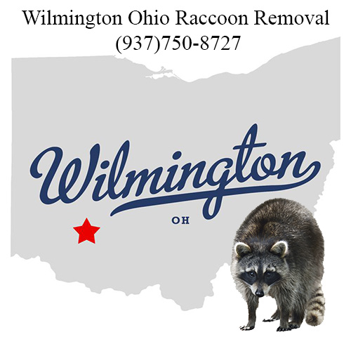 Wilmington Ohio Raccoon Removal