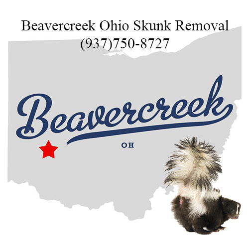 beavercreek ohio skunk removal