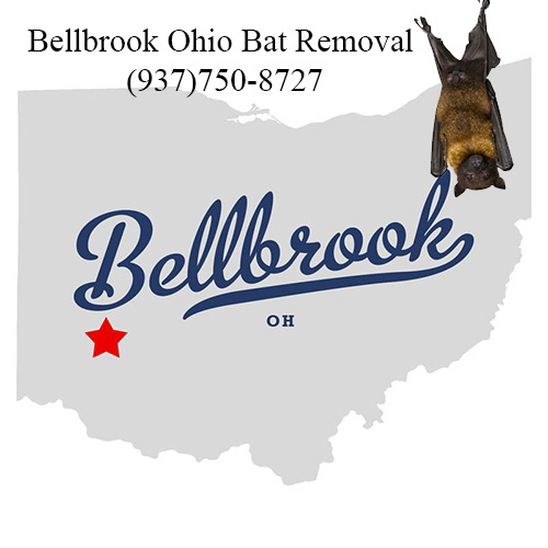 bellbrook ohio bat removal