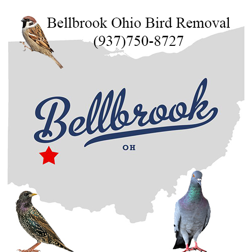 bellbrook ohio bird removal
