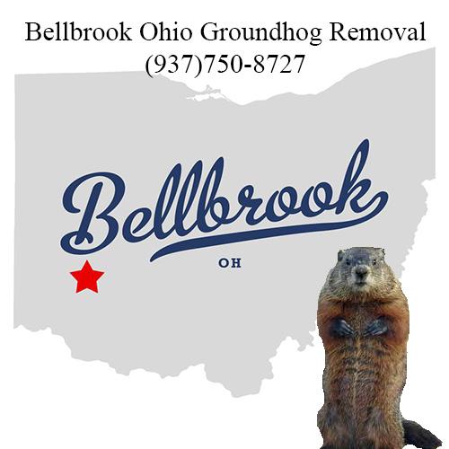 bellbrook ohio groundhog removal